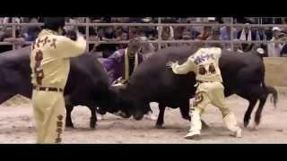 【うるま市公式】闘牛