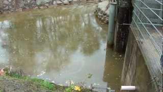 preview picture of video 'Verockerte Drainage am Pumpwerkspolder Altermanngraben 27.10.12'