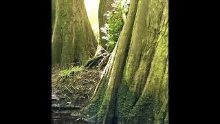 ISLAND CREEK NATIONAL FOREST ...a virtual field trip