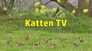 Cat TV - Little Birds on The Lawn