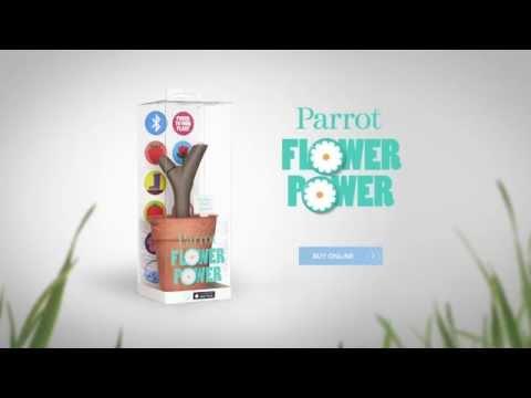 Video of Parrot Flower Power