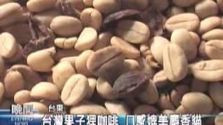 2009-10-19公視晚間新聞飼養果子狸 台東種出麝香貓咖啡)