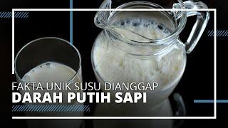 Fakta Unik Susu di Indonesia, Pernah Dianggap Darah Putihnya Sapi atau Kerbau