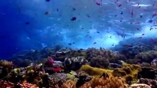 ANGGUN - OCEAN LOVE - Океан Любви.mp4