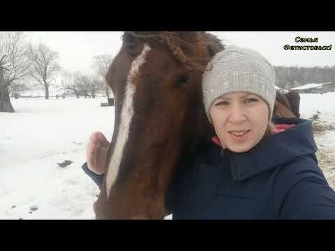 Обучаем коня. Отёлы впереди. Грандсток /Семья Фетистовых