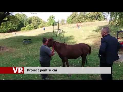 Proiect pentru cai