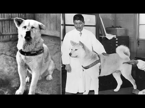 Hachiko - A True Story Of A Dog's Love For His Master [Hindi]