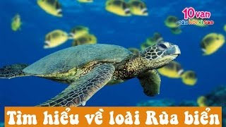 preview picture of video 'Tìm hiểu về loài Rùa biển (10 vạn câu hỏi vì sao)'