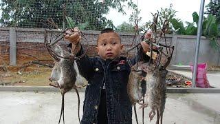 Thịt Chuột 7 Món - Cùng Mao Đệ Đi Bẫy Chuột Sau Tết Và Cái Kết