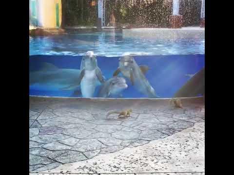 Delfiny zafascynowane wiewiórkami bawiącymi się koło ich zbiornika