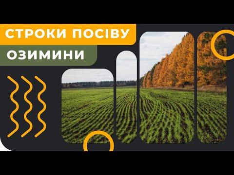 Сроки посева озимой пшеницы
