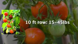 Growing Enough Food to Feed a Family - How Much Do You Need to Plant?