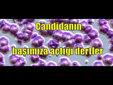 CANDIDA MANTARININ BASIMIZA ACTIGI DERTLER ! (kandida mantarının yol açtıgı hastaliklar)