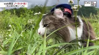 Vol.115「にゃん旅鉄道」自然が大好きだにゃ!