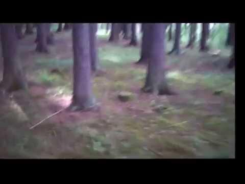 nic - NIC - Sama v lese