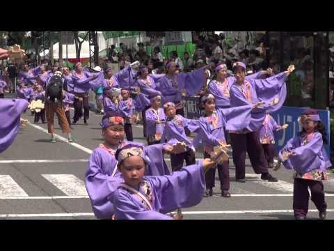 学校法人やまもも学園桜井幼稚園 第62回よさこい祭り 本祭2日目 追手筋 南側