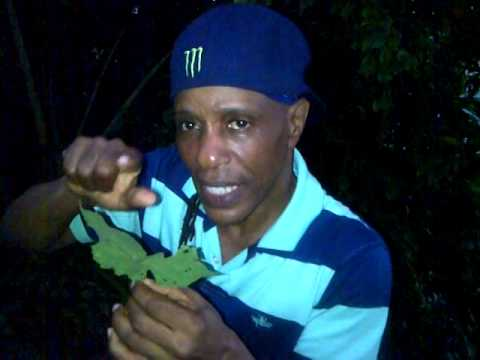 "Video ""The great benefits of stingy nettle"" - Grenada Herbalist  Patrick Delves"