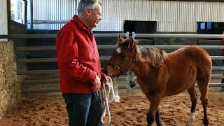 Introduction to Neil's Foal Handling Video Series