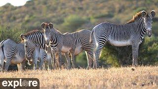 African Safari Camera powered by Explore.org