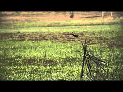 University of Wisconsin-Whitewater - video