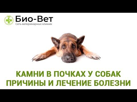 Камни в почках у собак- причины и лечение болезни