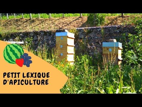 , title : '🐝 Petit lexique de l'apiculteur débutant