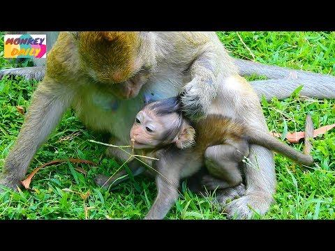 Listen to me! Go far keep silent & no active   Brinn mom wean Bree baby   Monkey Daily 1463