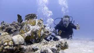 preview picture of video 'Plongée - Grand Baie Aquarium - Poisson Crapaud et Poisson Pierre - 13/11/2013'
