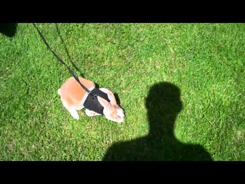 Vlog: My amazing pets!