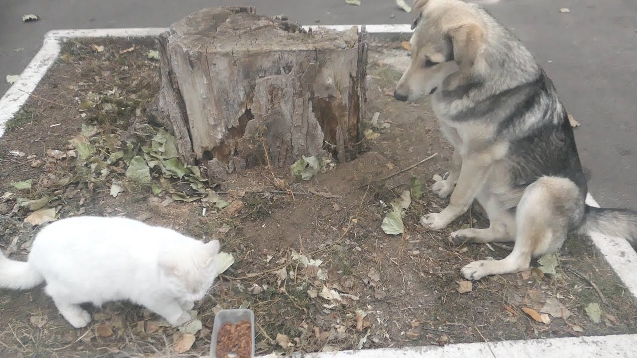 Hungry cat and friendly stray dog