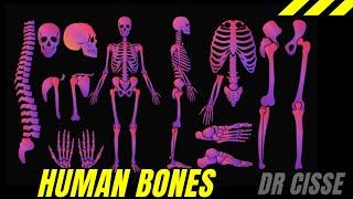 English: Dr. Cisse teaching the 206 human bones in 10 mins