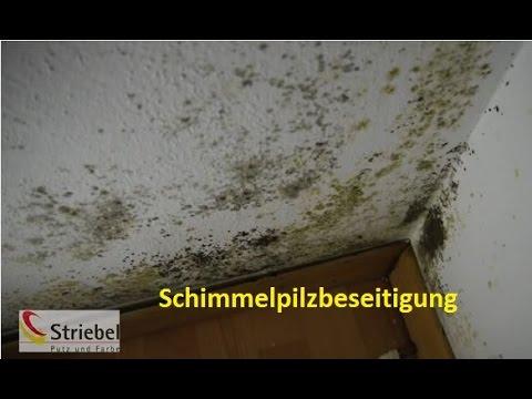 Das Mittel von gribka der Nägel der Preis in moskwe
