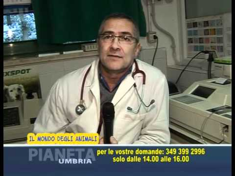 Come in vermi di medicina