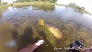 Автор поймал огромного карпа и отпустил его - Видео онлайн