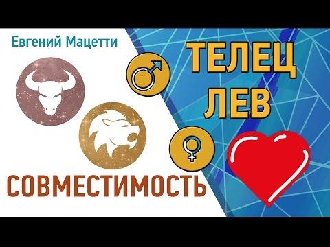 Телец и Лев. Гороскоп совместимости ♥ Любовный и сексуальный гороскоп