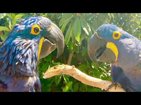 HOW TO READ PARROT BODY LANGUAGE!