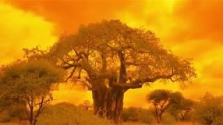 BAOBAB- THE TREE OF LIFE