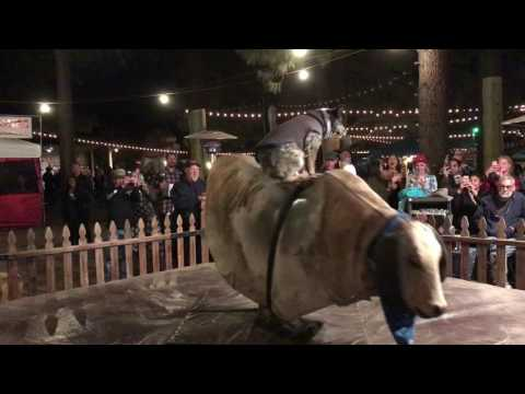 This Dog Can Ride a Mechanical Bull Better Than You