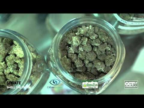 video 0 - Herbal Bliss gallery