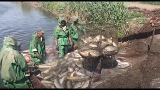 Таксы за незаконный вылов рыбы