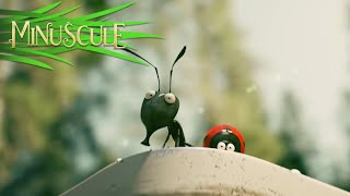 Minuscule Valley Of The Lost Ants - Official Trailer