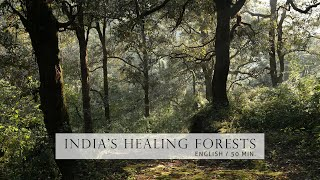 Nature Documentary - Healing Forests of India   English, HD