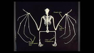 Fossils of the Night: The History of Bats Through Time