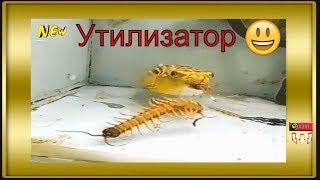 Рыба  Утилизатор Поедающее всё подряд . 2018 НЕОБЫЧНЫЙ ВИД РЫБ .😀 😁 😂
