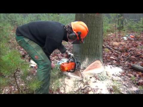 Opzet opleiding specialisatie bos en natuurbeheer for Opleiding tuin