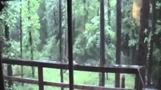 Tuscaloosa Tornado, Al 4/27/11 Long Video