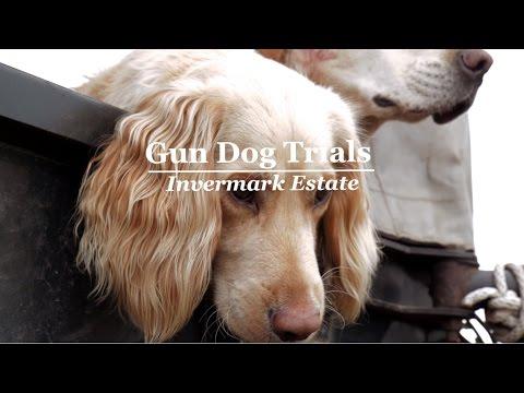 Dog Trials - Invermark Estate (Angus Glens Moorland Group)