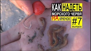 Ловля червя для ловли пеленгаса