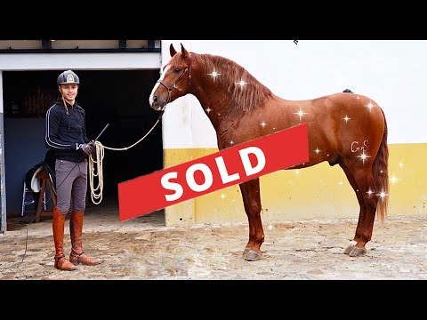 HORSE SHOPPING FOR A BEAUTIFUL STALLION (again)