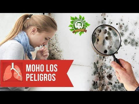 Crevni paraziti kod macaka simptomi